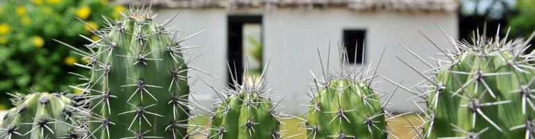 Een typische cactusheg in Vista Montaña